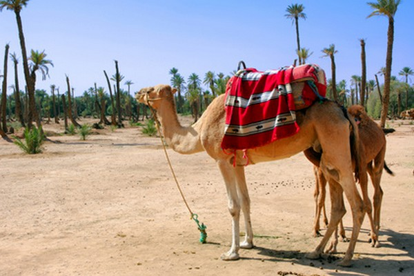 7 Days Tour from Marrakech to Merzouga